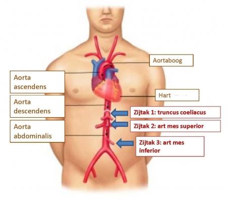 Zuurstoftekort in de buik | UZA